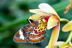 Butterfly sitting on a flower.