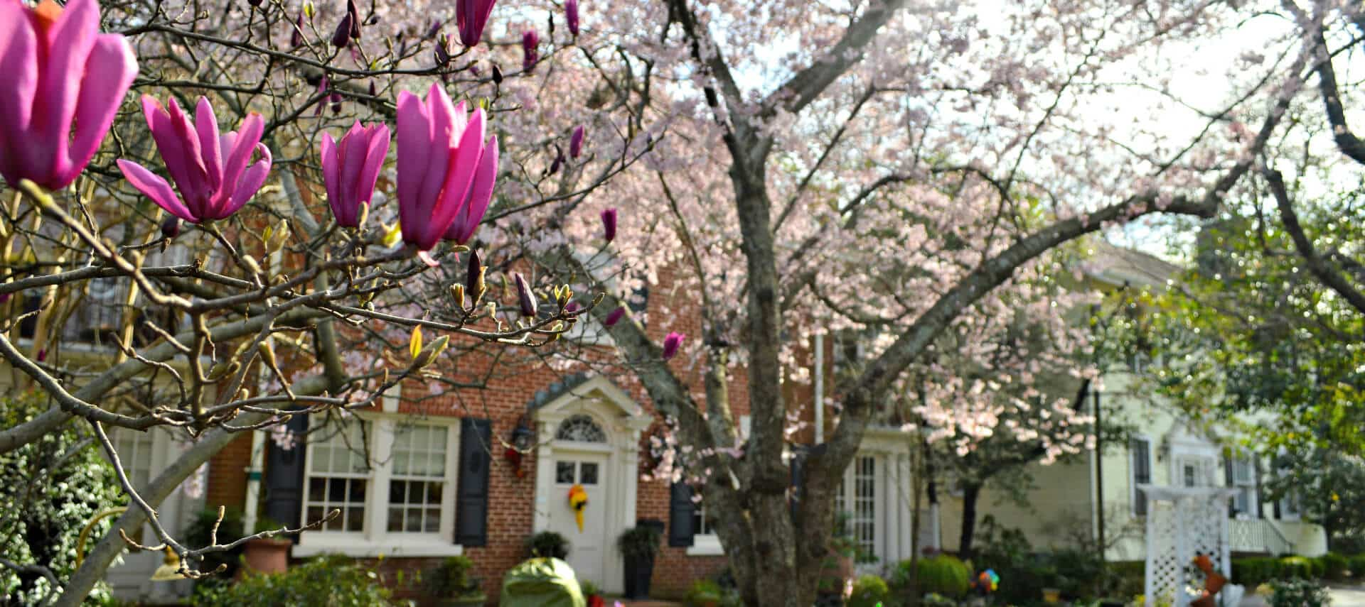 Large brick home fronted by tree blooming with pink flowers.